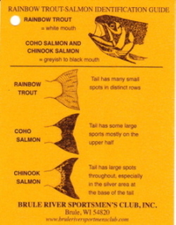 Salmon_id_side1