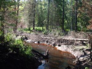 Beaver pond site.