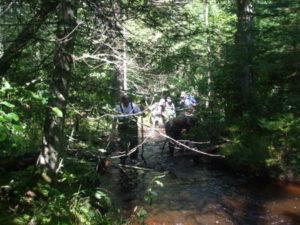 Below beaver dam.