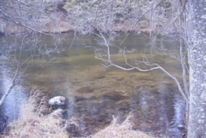 A finished spawning site